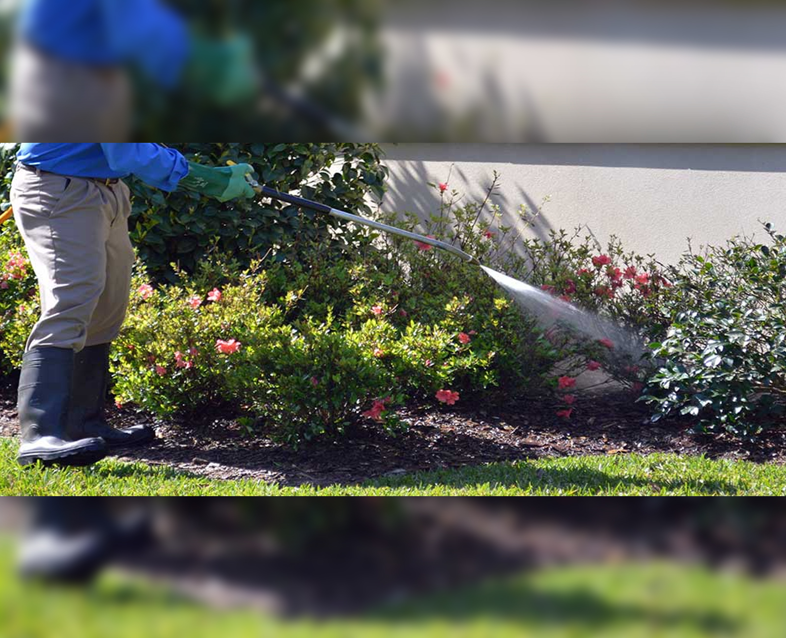 Maple Leaf Tree and Shrub Care Marietta GA