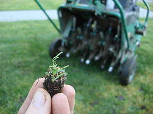 Aeration Overseeding