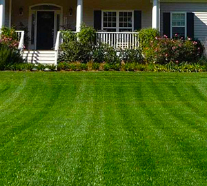 Lawn Care Dunwoody GA